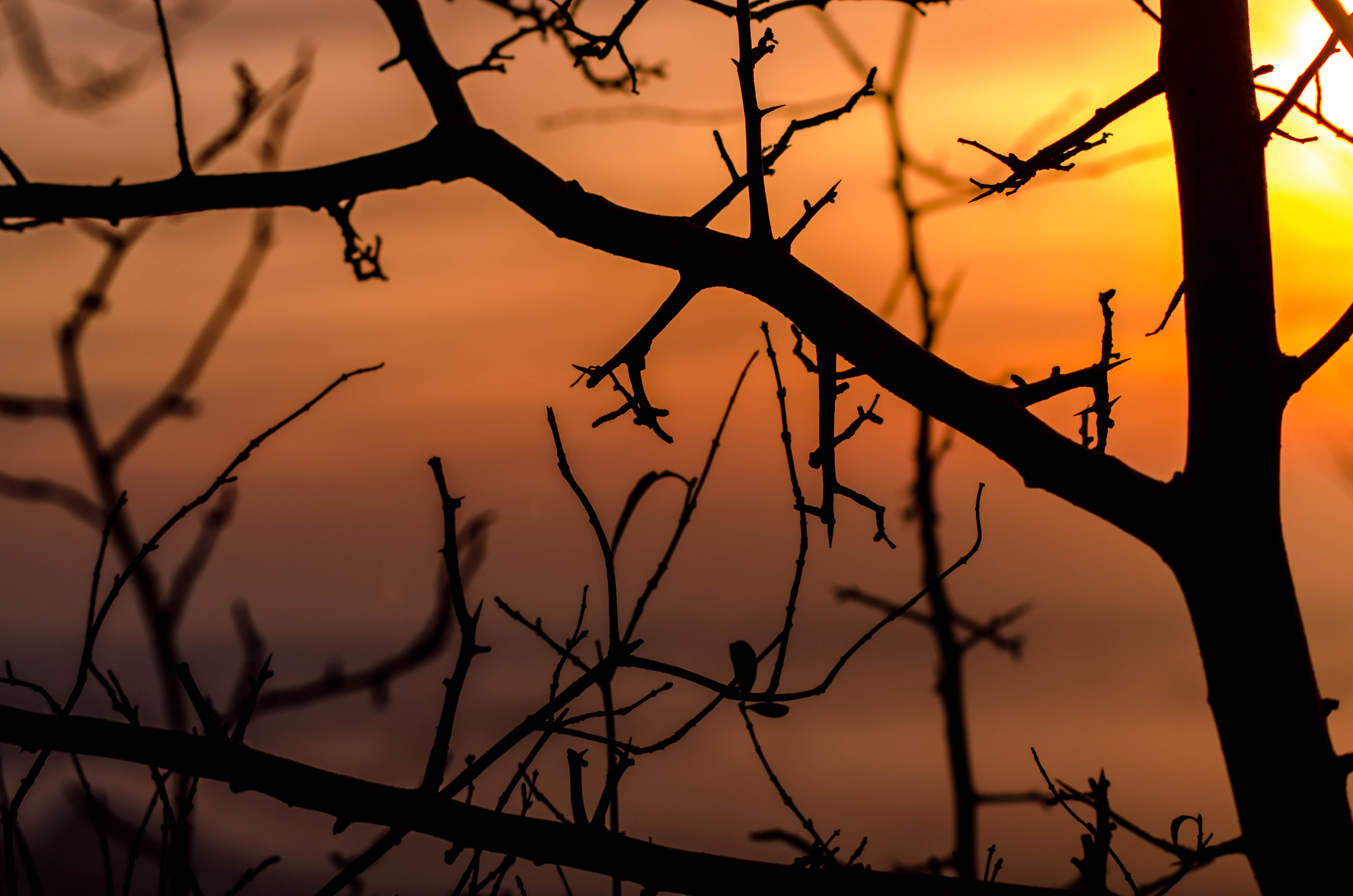 Branches during Sunset